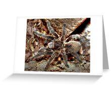 Chilean rose tarantula Greeting Card