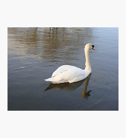 Swan Reflection Photographic Print