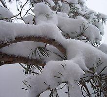 Snow Coat by Martha Medford