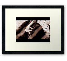 silent dreams Framed Print