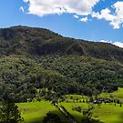 Lamington National Park by ericrmc