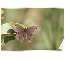 Butterfly with incomplete wing.  Poster