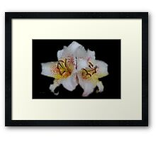 Textured White Lilies  Framed Print