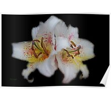 Textured White Lilies  Poster