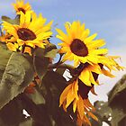 Sunflower by Smile79