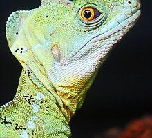 Green Lizard by Darrick Kuykendall