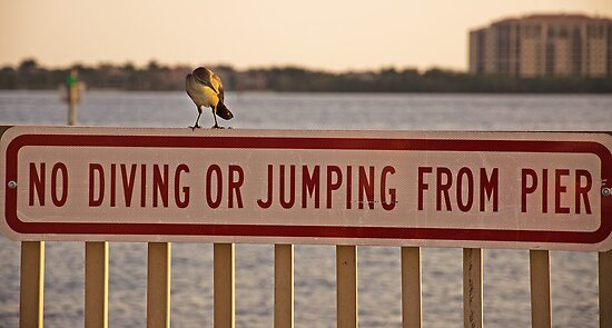 If I Can't Jump How Do I Get Off Here?? by John  Kapusta