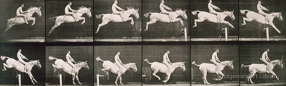 Man and horse jumping a fence, plate 643 from 'Animal Locomotion', 1887  by Bridgeman Art Library