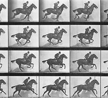 Galloping Horse, plate 628 from 'Animal Locomotion', 1887 by Bridgeman Art Library
