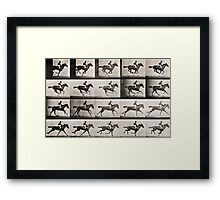Jockey on a galloping horse, plate 627 from 'Animal Locomotion', 1887 Framed Print