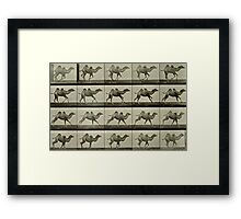 Camel, plate from 'Animal Locomotion', 1887 Framed Print