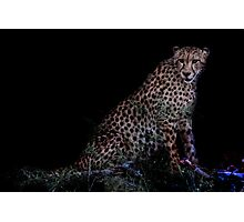 Cheetah in Africa Photographic Print