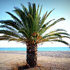 palm tree by mkokonoglou