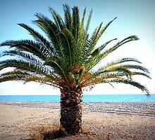 palm tree by mkokonoglou