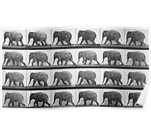 Elephant walking, plate 733 from 'Animal Locomotion', 1887  Poster