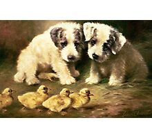 Sealyham Puppies and Ducklings Photographic Print