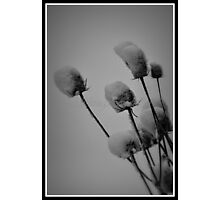 All Things Wonderful ( Flowers) Photographic Print