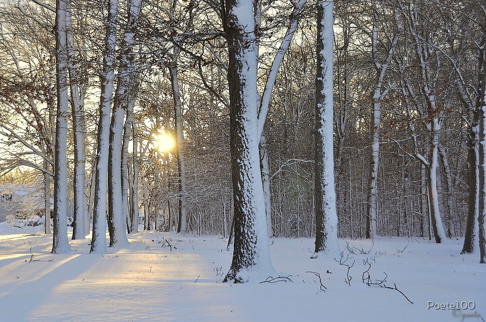 After Blizzard when the sun came out #1 by Poete100