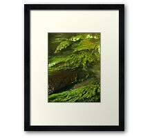 river weed Framed Print