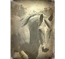 Scotch Faux Vintage Photographic Print