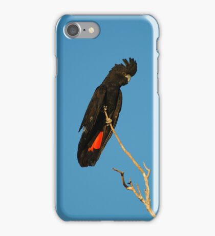 Red Tailed Black Cockatoo iPhone Case/Skin