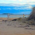 Sand Beach, Acadia National Park  by Dan Hatch