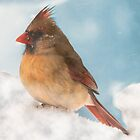 Female Cardinal by browncardinal8