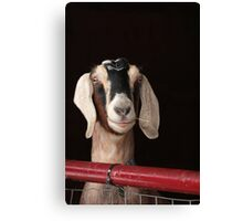 Hey Goat ! Canvas Print