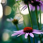 purple coneflower by kelly ishmael