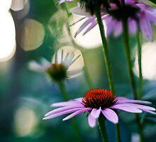 purple coneflower by kelly ishmael