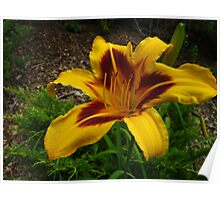 Lily gorge Poster