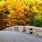 The Glory of Fall at Acadia by Anita Pollak