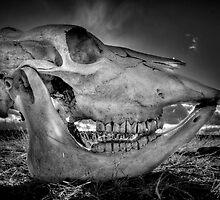 Mad Cow by Bob Larson