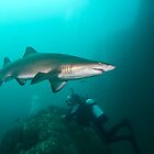 Pete with North Rock Sharks. by Matt-Dowse