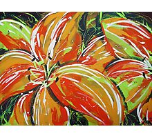 Wild Tiger Lilies Photographic Print