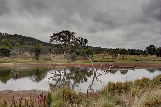 Dry Land Ahead Tin Hut Rural NSW Australia  by Kym Bradley