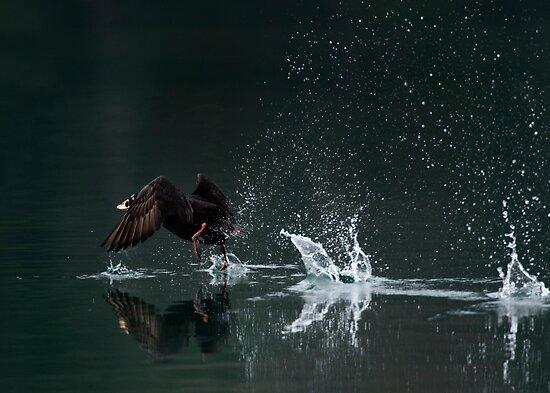 Water Dance by toby snelgrove  IPA