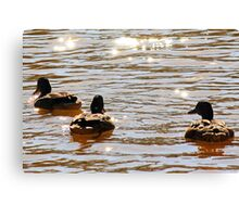 Duck Tails Canvas Print