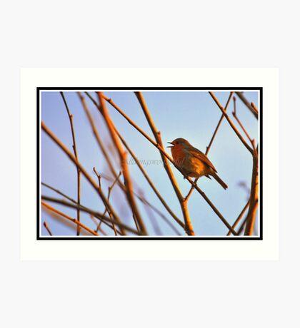 Dawn song (Nature birds) Art Print