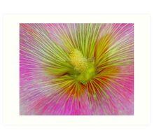 Natures wonders (Macro flowers) Art Print