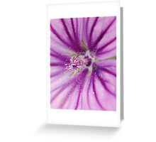 Summer colours (Macro flowers) Greeting Card