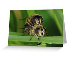 Mating honey bees (Macro insects) Greeting Card