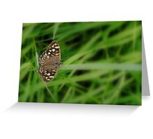 Spring butterfly (Macro butterfly) Greeting Card