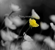 Buttercup (flowers) by Steve Parsons