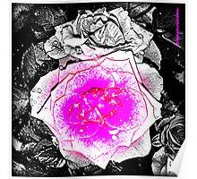 Pop ART Flowers Poster