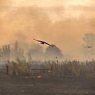 Firebird by Leigh Monk