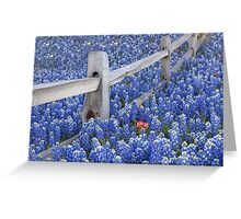 Texas Bluebonnets surround an Indian Paintbrush Greeting Card