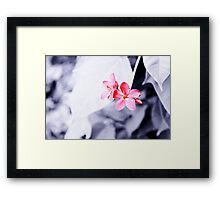 Maroon flowers Framed Print