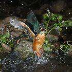 Kingfisher 2 by Jose Santamaria