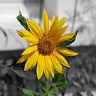 English sunshine by Flossy13